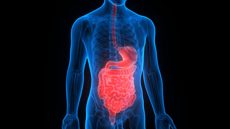 what-does-a-gastrologist-do